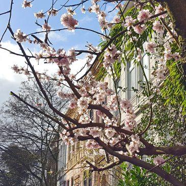 Mein Bremen: Frühlingsgedanken