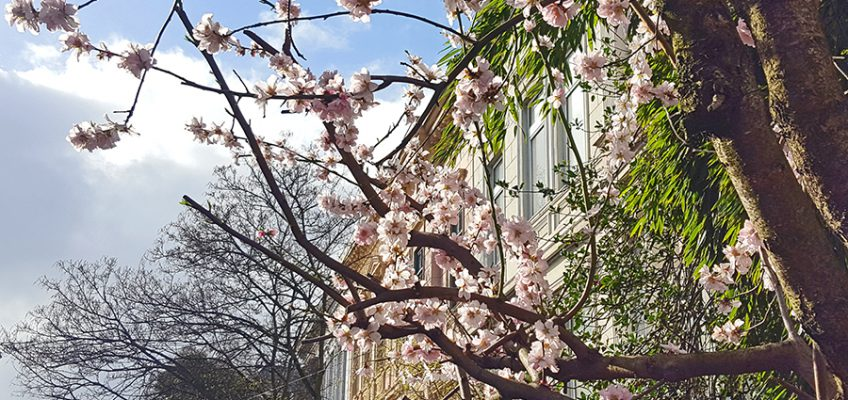 Frühling im Bremer Viertel