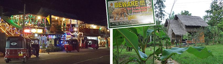 Zwischen Baumhaus und Ortskern - wilde Elefanten