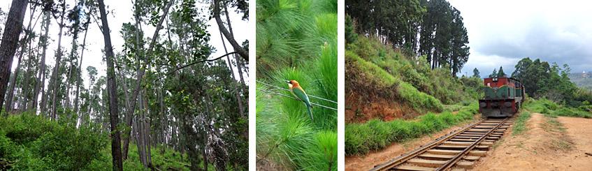 Wald, Vogel und - Achtung: Zug!