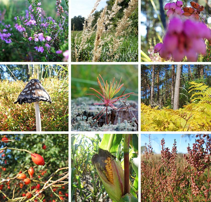 Pflanzenvielfalt in Heide und Moor
