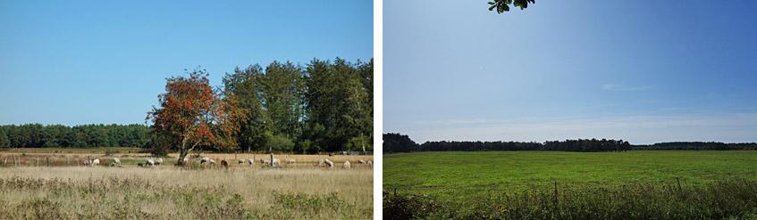 Weite norddeutsche Landschaften