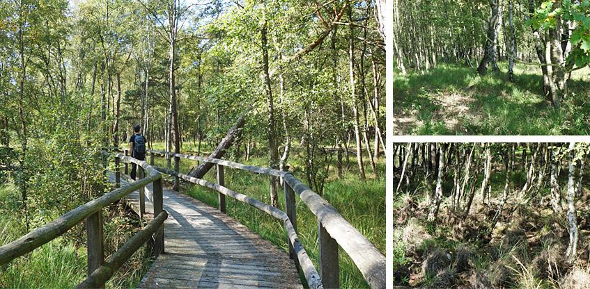 Holzstege führen über - sonst nasse - Flächen