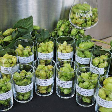 Grüner Kuckuck – Grünhopfenbier fürs Craft Beer Event