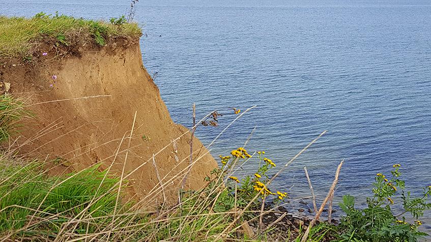 Klippen und Blumen und Meer