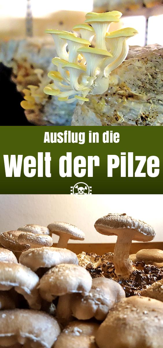 Ausflug in die Welt der Pilze