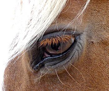 Auge der Pferde-Blondine