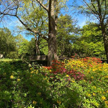 (Letzte) Ruhe im Park
