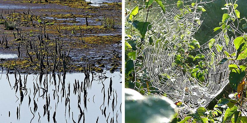 Totes Holz und lebende Spinne